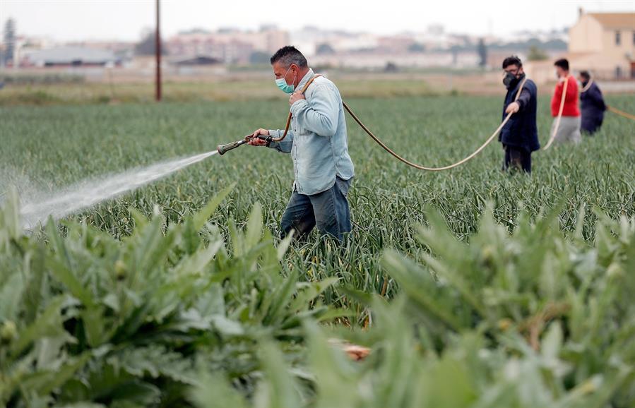 Agricultura, el sector que más crece en España